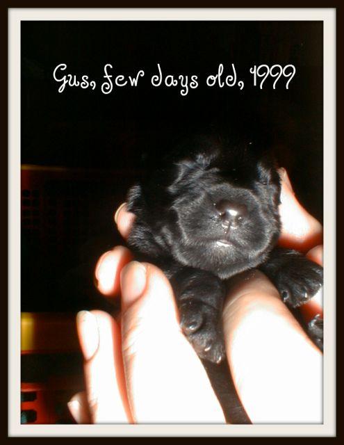 gus, few days old