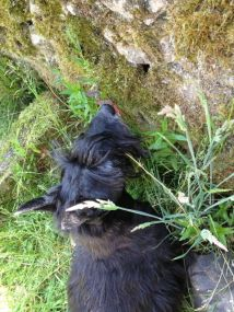 that pesky vole is in there!
