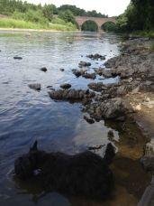 River Tweed, having yet another slurp