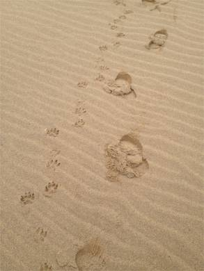 brilliant beachy walks 2