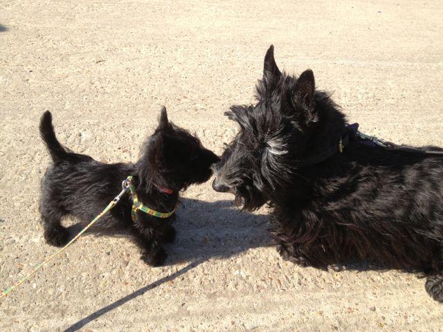 new seaside friends 1