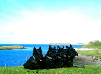 Kelpie, Izzy, Finlay and Bobby, Isle of Skye, 2005
