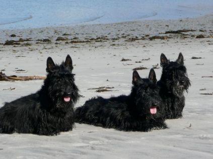 The three boys