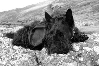 Bobby, again Isle of Skye, 2005 copy
