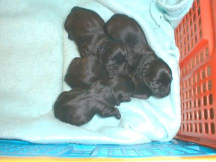 4 little puppies