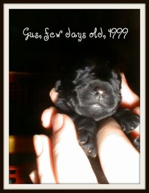 Gus, just a few days old