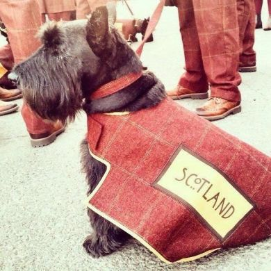 Hamish, the Scottish Scottie!
