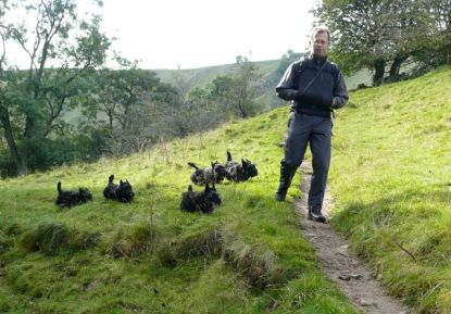 Scampering Scotties in Derbyshire, circa 2007