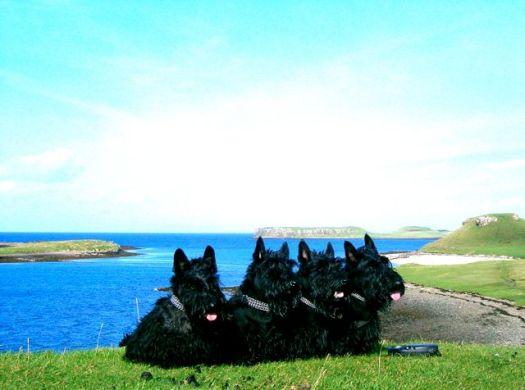 Kelpie, Izzy, Finlay & Bobby, Isle of Skye, 2005