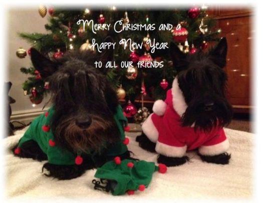 bobby and fabi christmas copy