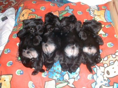 4 little boys