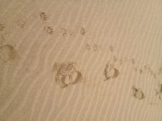 Our foot prints in the sand, Mablethorpe