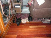 Unsure of the wooden floor