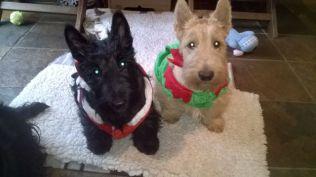 Christmas Scotties