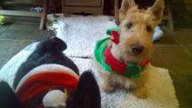 "Tayler ""little cute elf"""