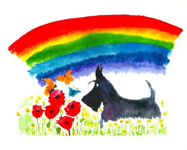 rainbow poppy scottie copy