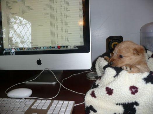 pup slave labour