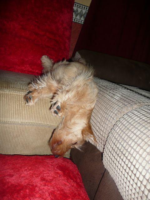 Upside down sleeping