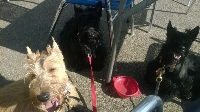 Scottie fun in the sun