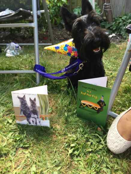 Bertie with his cards
