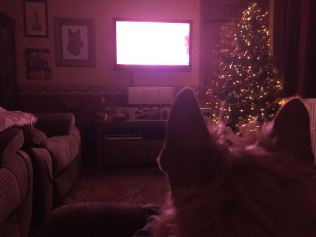 Watching it all from the comfort of my settee!