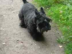 Clan Walk, Poppy 2006