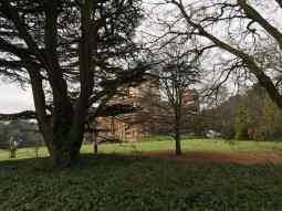 Back garden of Batman's house through the trees