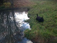 Swanick Walk, Finlay 2012