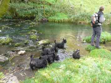 Izzy, Gus, Kelpie, Bobby and Finlay,