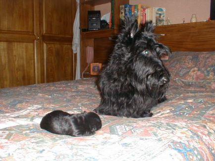 Izzy and baby Kelpie