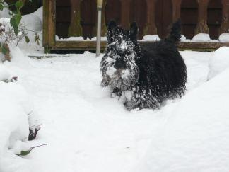 Snowy Finlay