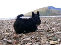 Kelpie on Isle of Skye, 2005