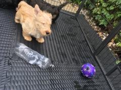 Mmmmm a plastic bottle