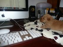 Qwerty keyboard work, Tayller