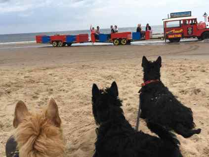 Sand Train at the Seaside