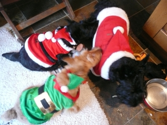 Undercover for christmas