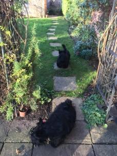 Visitors garden
