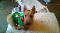 Undercover Elf