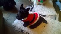 Undercover Santa