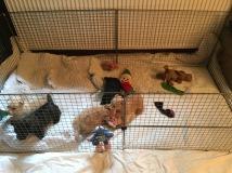 small indoor playpen