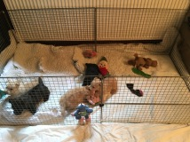 small indoor playpen