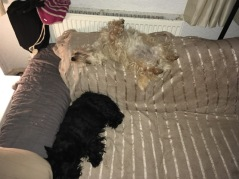 Alba and Broch - bored of guard duties